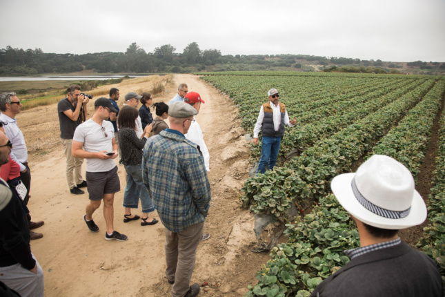 Van Alen Institute Climate Council meeting attendees visiting the strawberry fields at Driscoll's Farm, Watsonville, California. What if water use in cities was managed as precisely as it is for these plants?