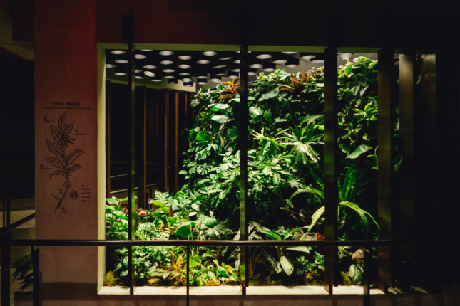 A terrarium with ferns and coffee plants native to Costa Rica can be found in the cellar, courtesy of the Baltimore-based Furbish.