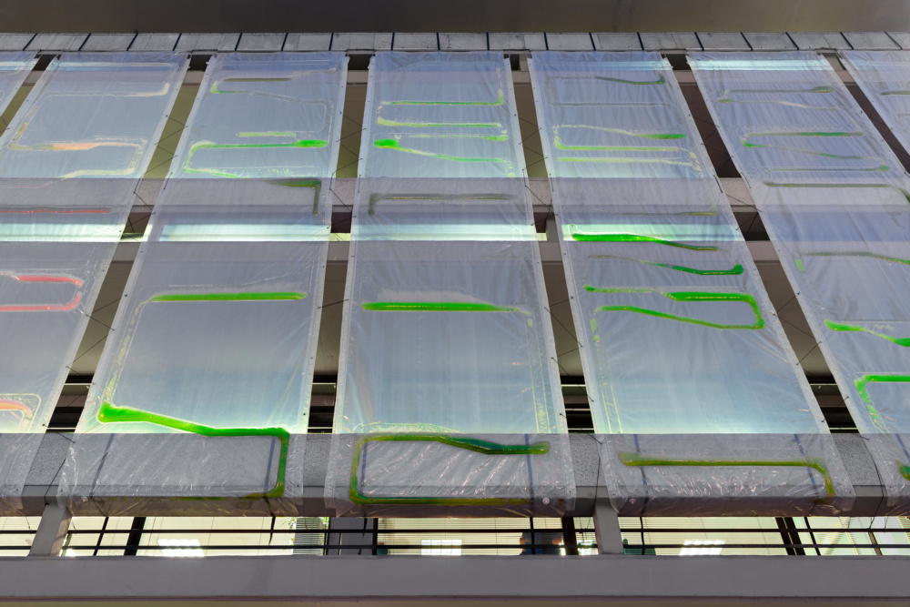 Algae carbon capture facade
