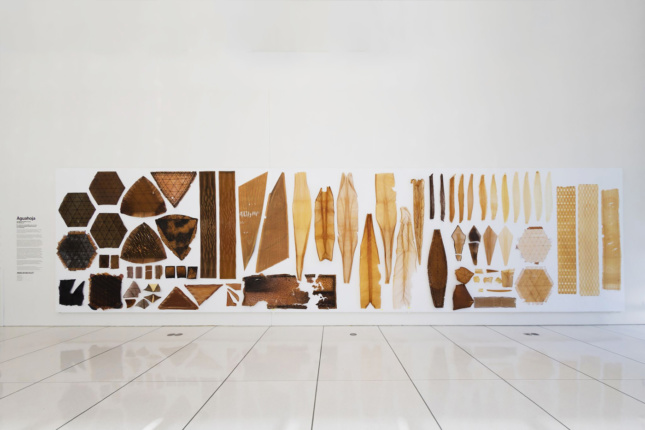 Photo of a museum installation of wood forms
