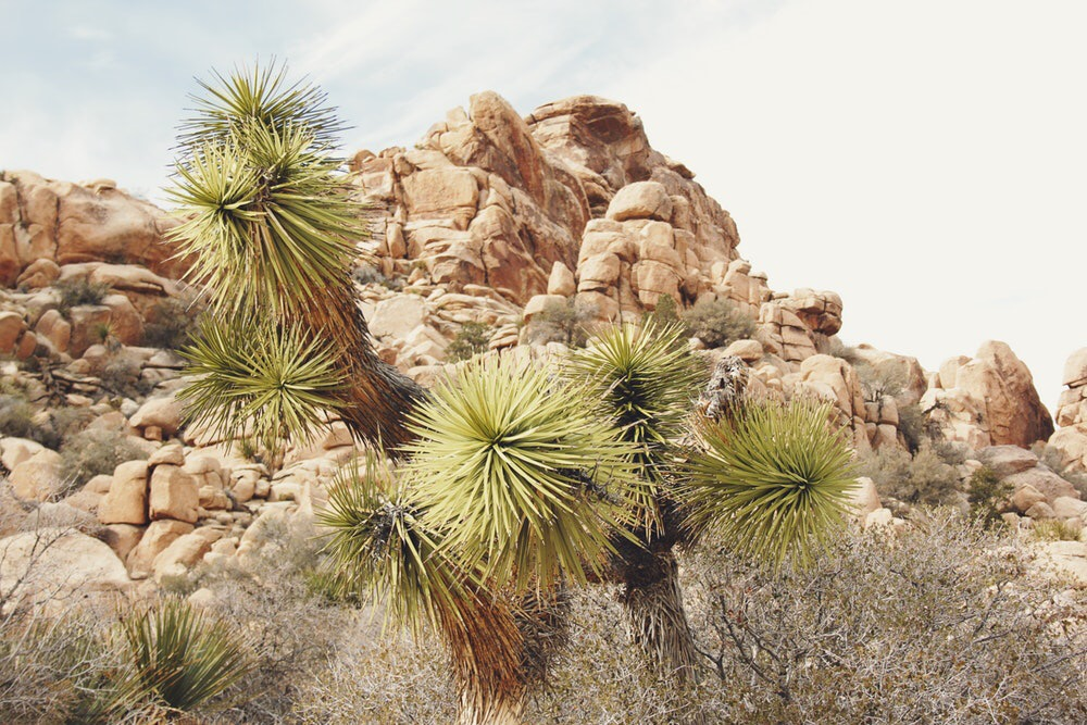 A photo of California's High Desert landscape