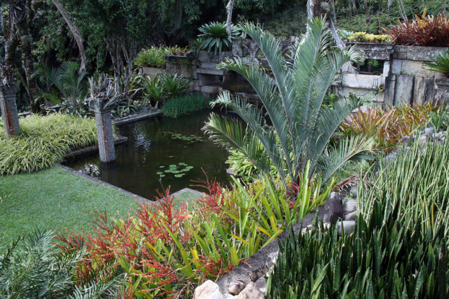 Photo of a Brazilian garden with palm bushes and a pond
