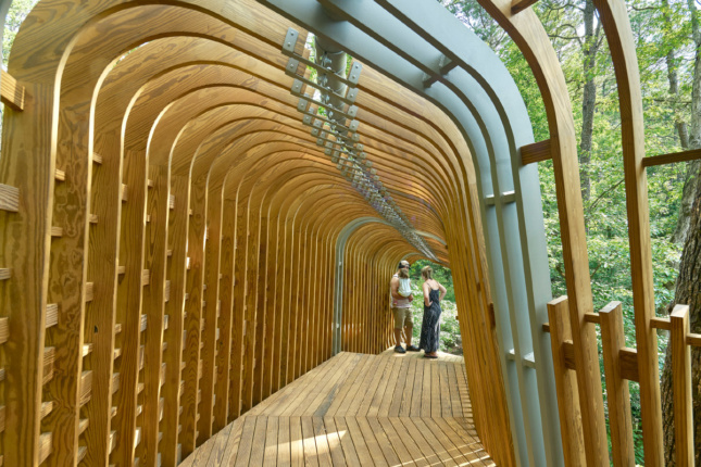 Photo of the interior of a treehouse ribbed in timber fins