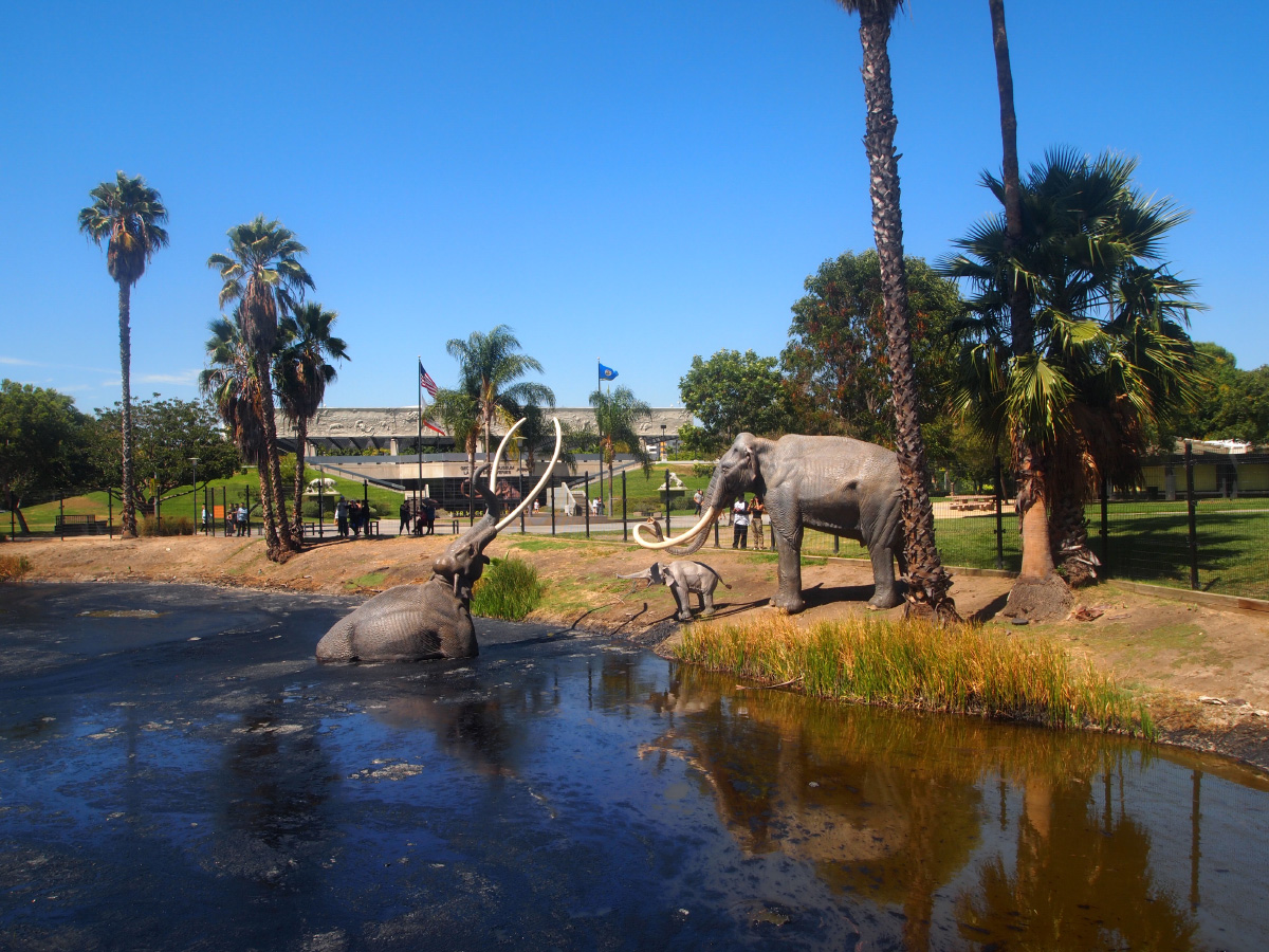Photo of a La Brea Tar Pits sculpture of a mammoth being pulled into a tar pit, while two mammoths on the shore watch and try to help