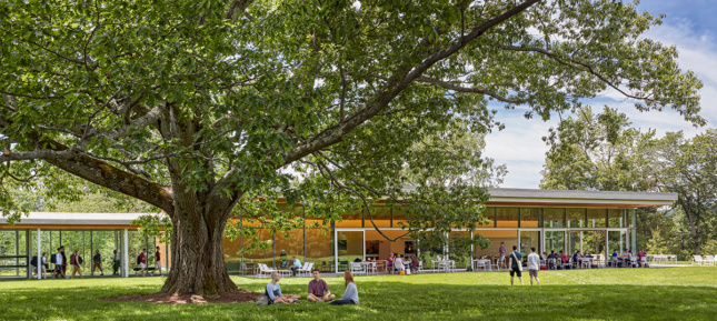 Image of large oak tree shading glass-walled cafe with people eating inside and on lawn
