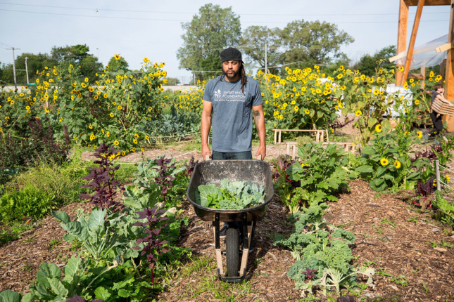 A man stands in a lush garden of sunflowers and greenery holding a wheel barrow filled with green vegetables.