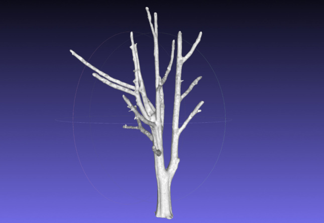 Digital rendering of a tree created by WholeTrees