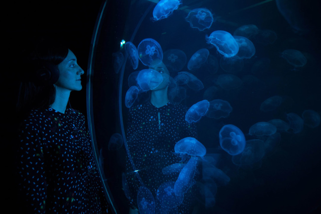Photo of a person looking into a blue jellyfish tank