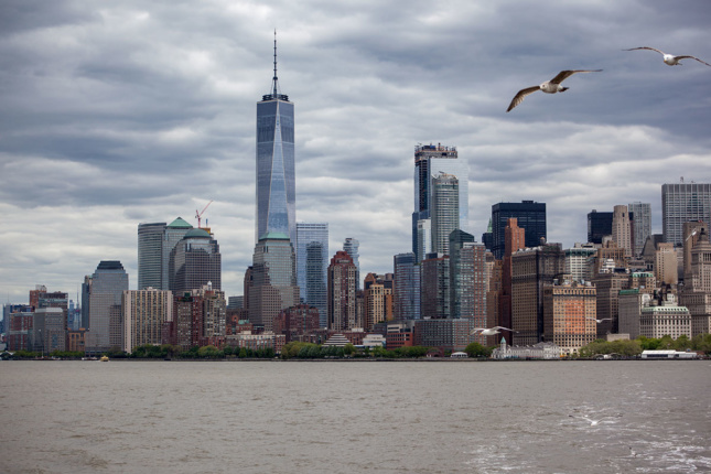 Seagulls flying over Manhattan skyline