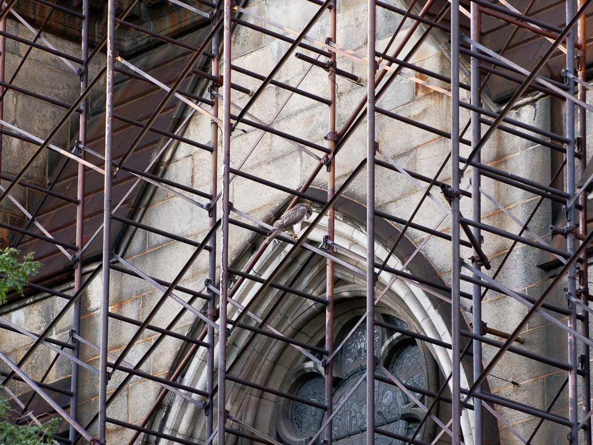 Up close photo of facade under scaffolding