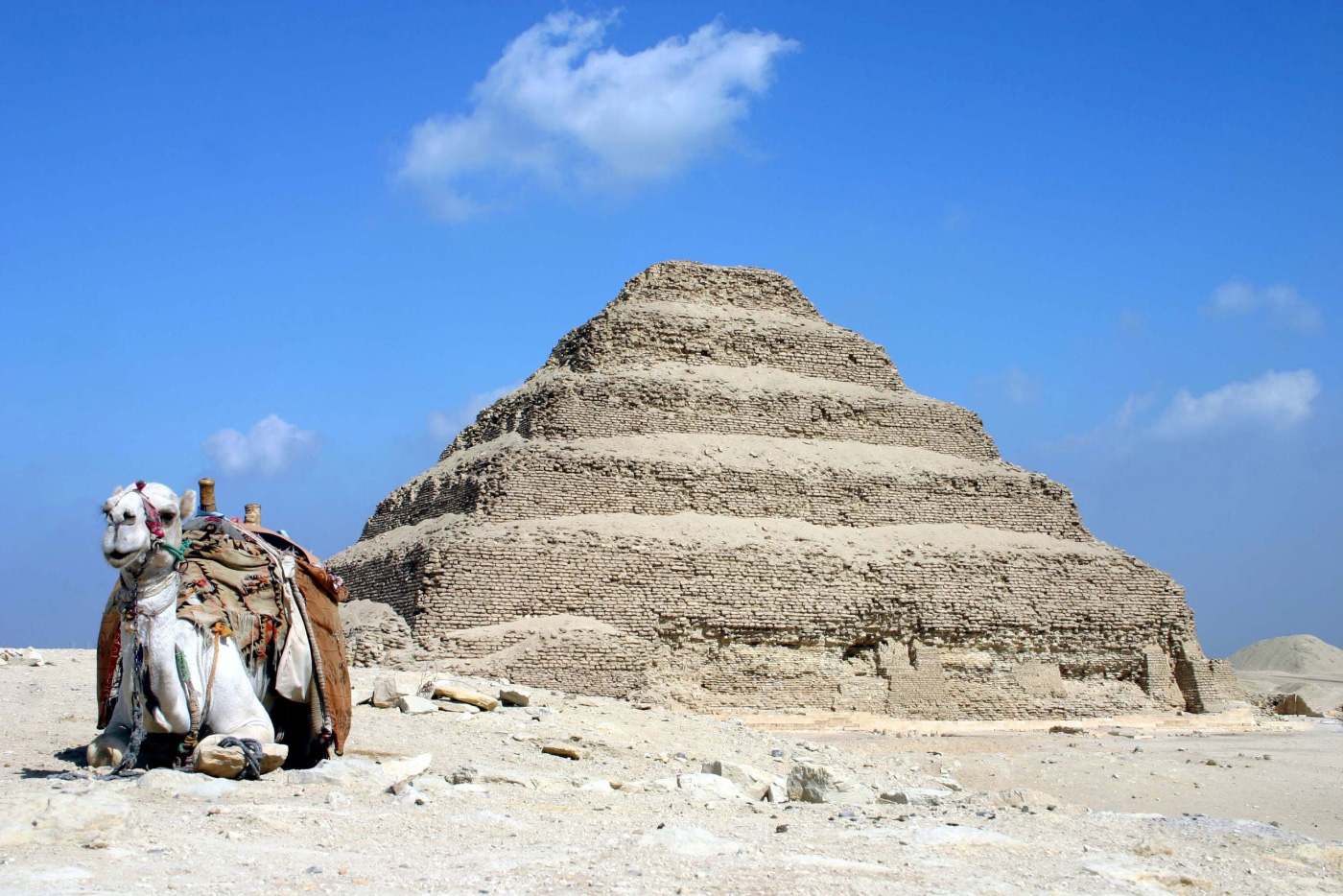 A camel next to a pyramid