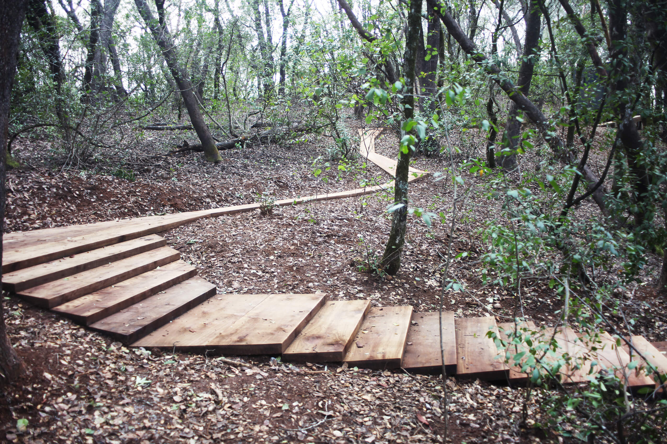 A wooden pathway through the woods